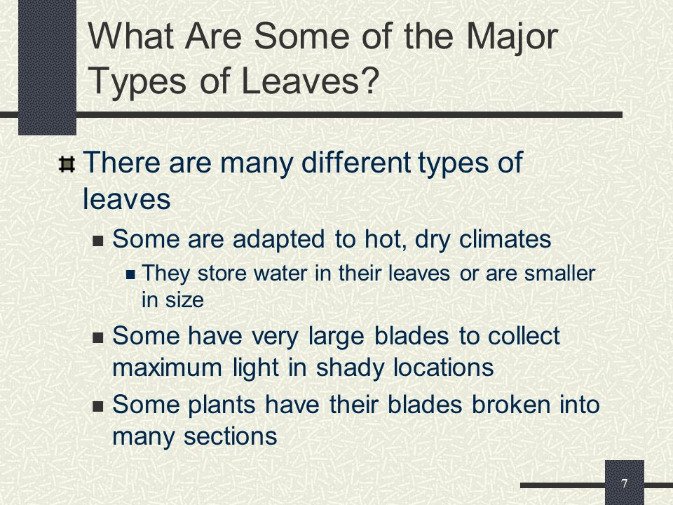 What Are Some of the Major Types of Leaves