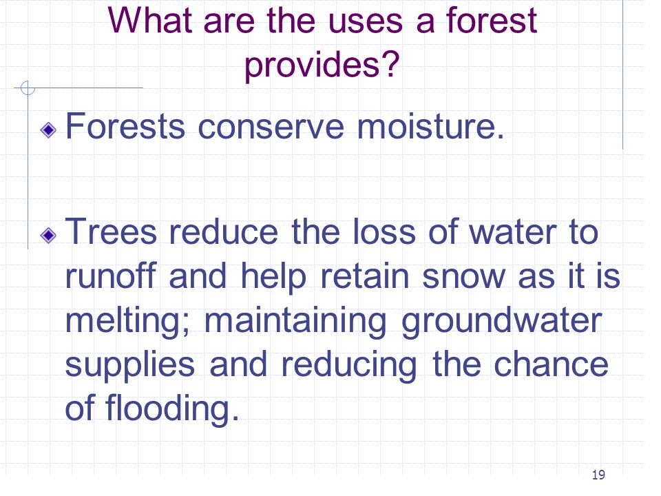 What are the uses a forest provides