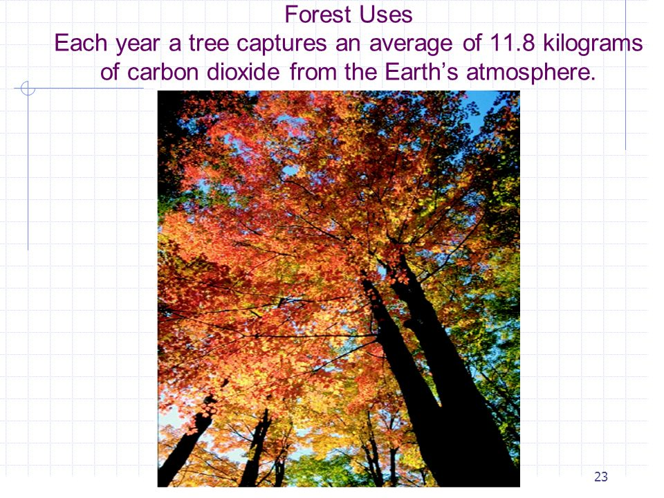 Forest Uses Each year a tree captures an average of 11