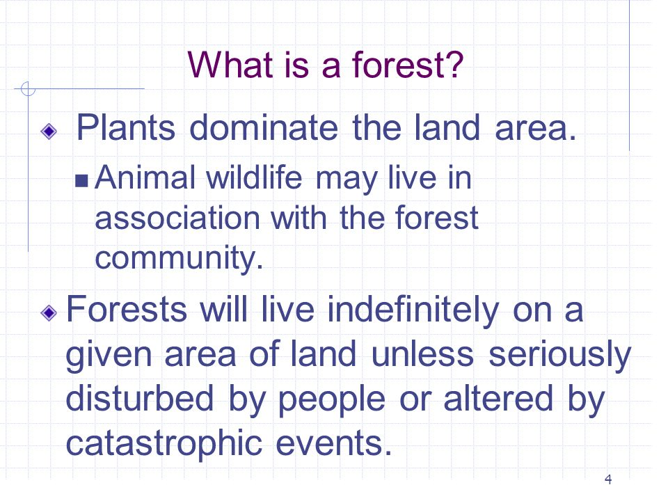 Plants dominate the land area.