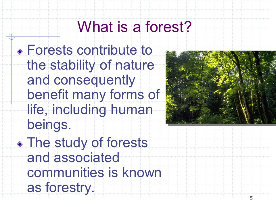 What is a forest Forests contribute to the stability of nature and consequently benefit many forms of life, including human beings.