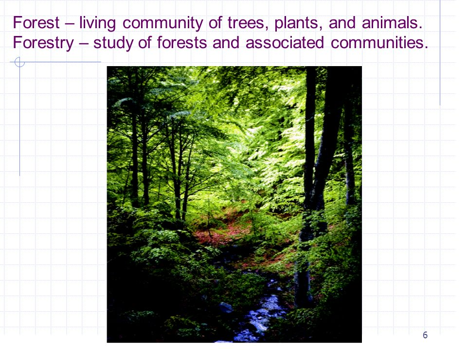 Forest – living community of trees, plants, and animals