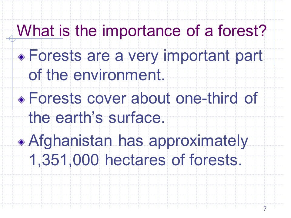 What is the importance of a forest