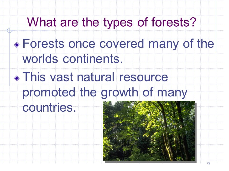What are the types of forests
