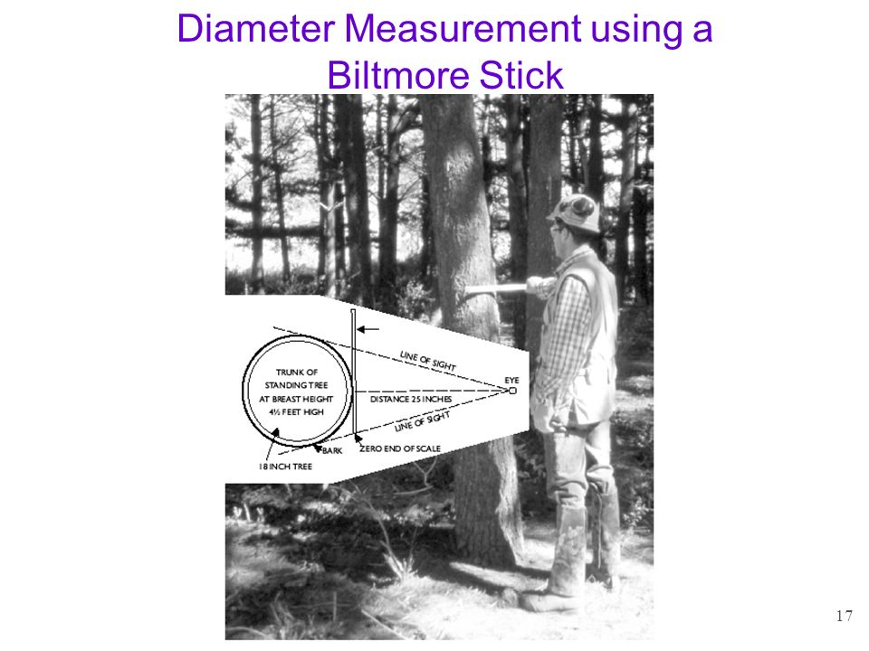 Diameter Measurement using a Biltmore Stick