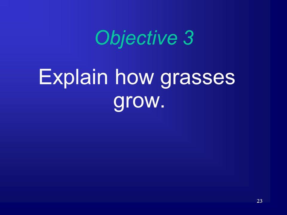 Explain how grasses grow.