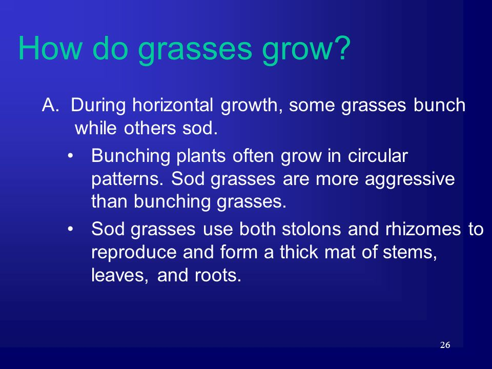 How do grasses grow A. During horizontal growth, some grasses bunch while others sod.