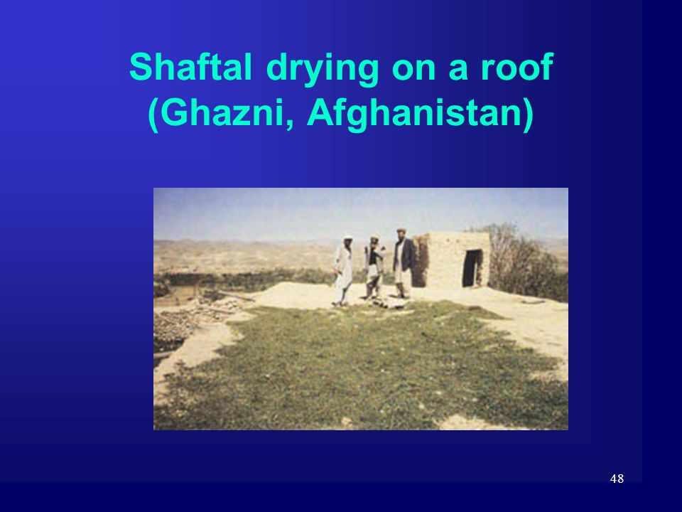 Shaftal drying on a roof (Ghazni, Afghanistan)