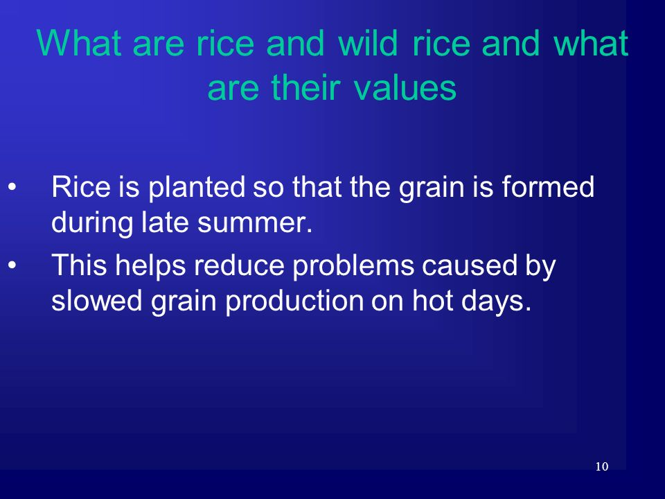 What are rice and wild rice and what are their values