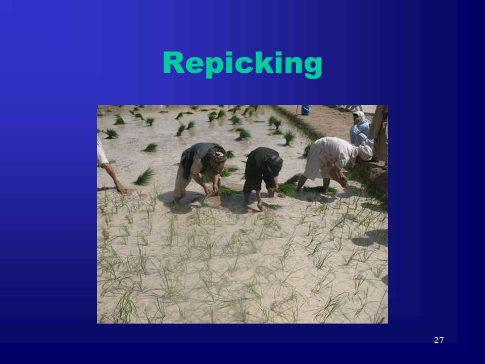 Repicking