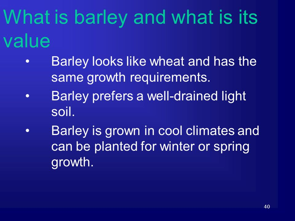 What is barley and what is its value