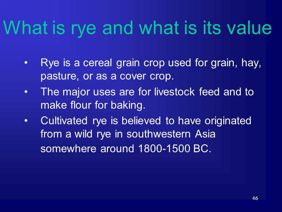 What is rye and what is its value