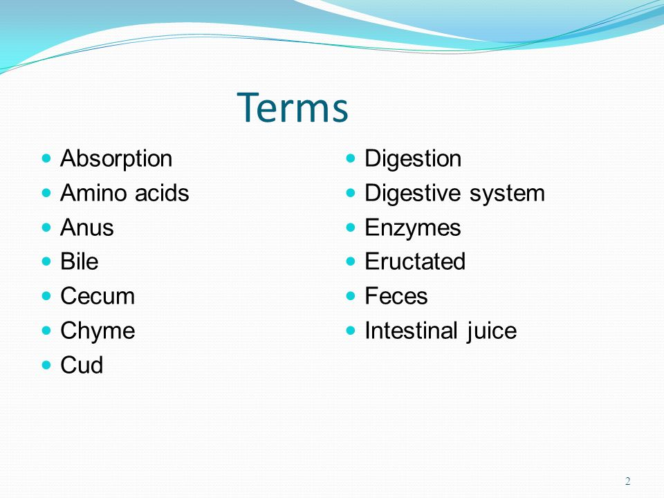 Terms Absorption Amino acids Anus Bile Cecum Chyme Cud Digestion