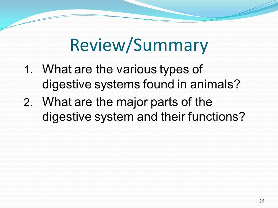 Review/Summary What are the various types of digestive systems found in animals
