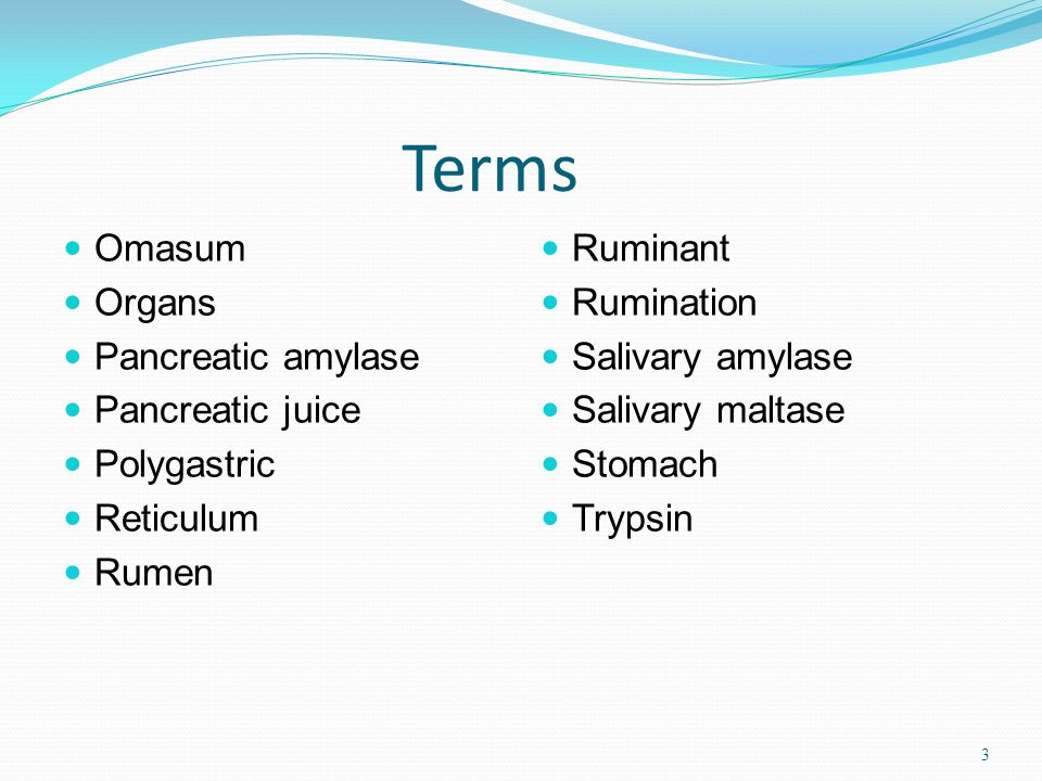 Terms Omasum Organs Pancreatic amylase Pancreatic juice Polygastric