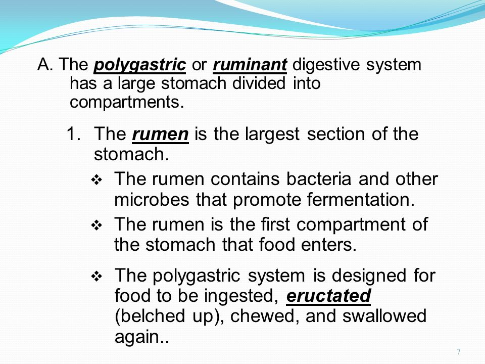 1. The rumen is the largest section of the stomach.