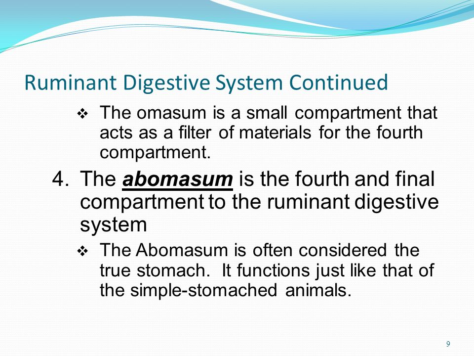 Ruminant Digestive System Continued