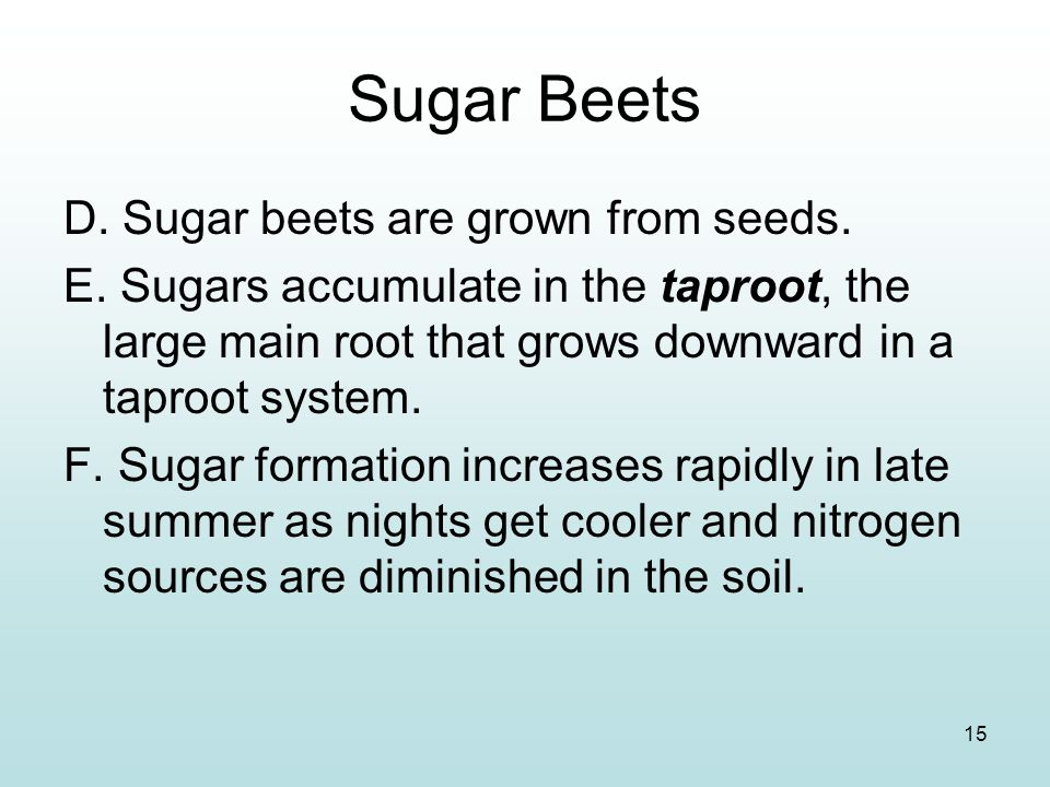 Sugar Beets D. Sugar beets are grown from seeds.