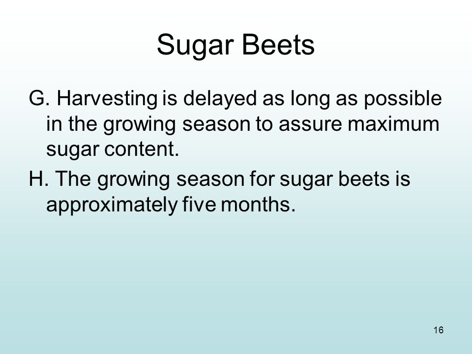 Sugar Beets G. Harvesting is delayed as long as possible in the growing season to assure maximum sugar content.