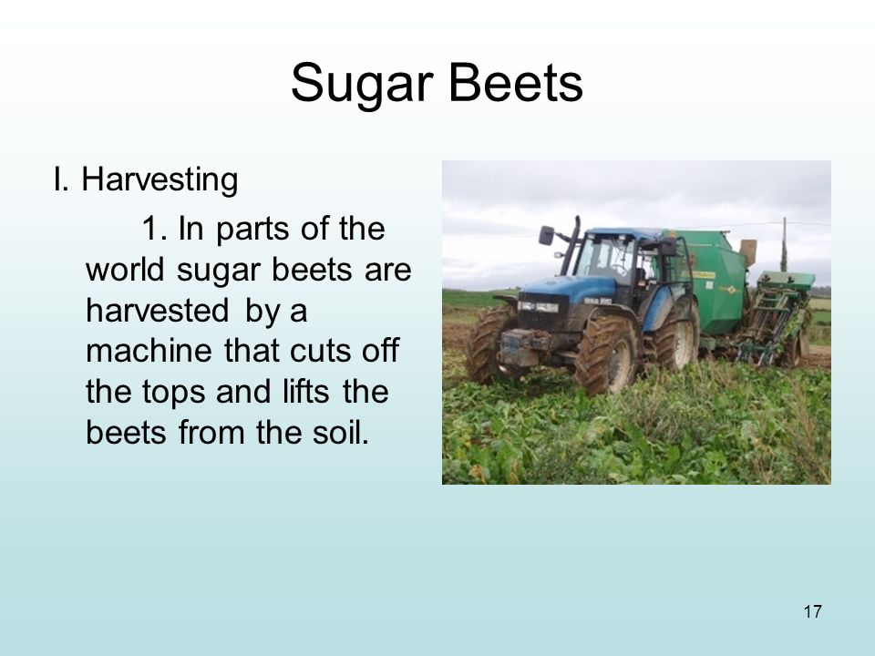 Sugar Beets I. Harvesting