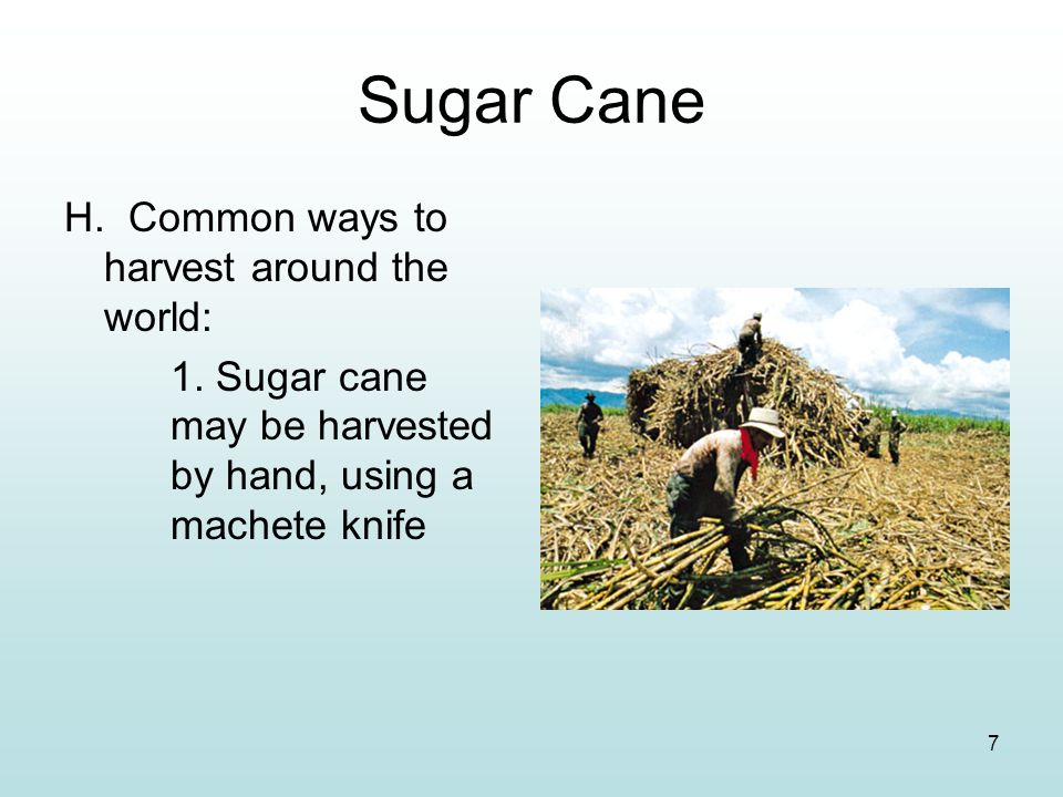 Sugar Cane H. Common ways to harvest around the world: