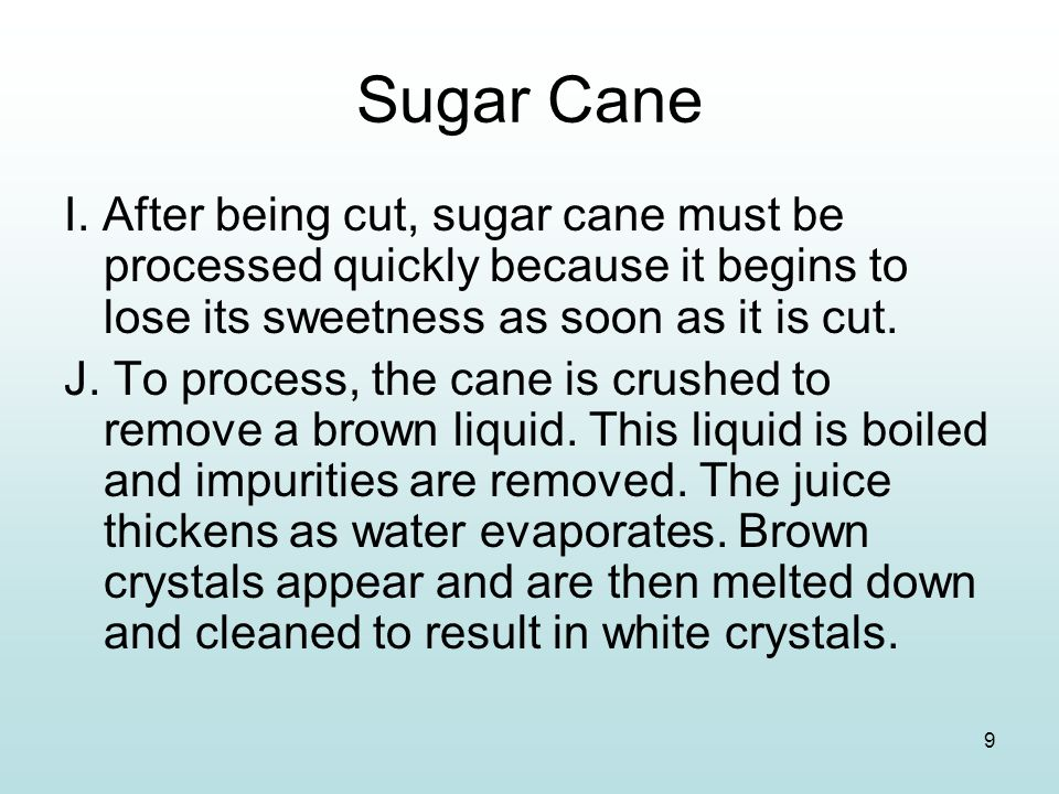 Sugar Cane I. After being cut, sugar cane must be processed quickly because it begins to lose its sweetness as soon as it is cut.