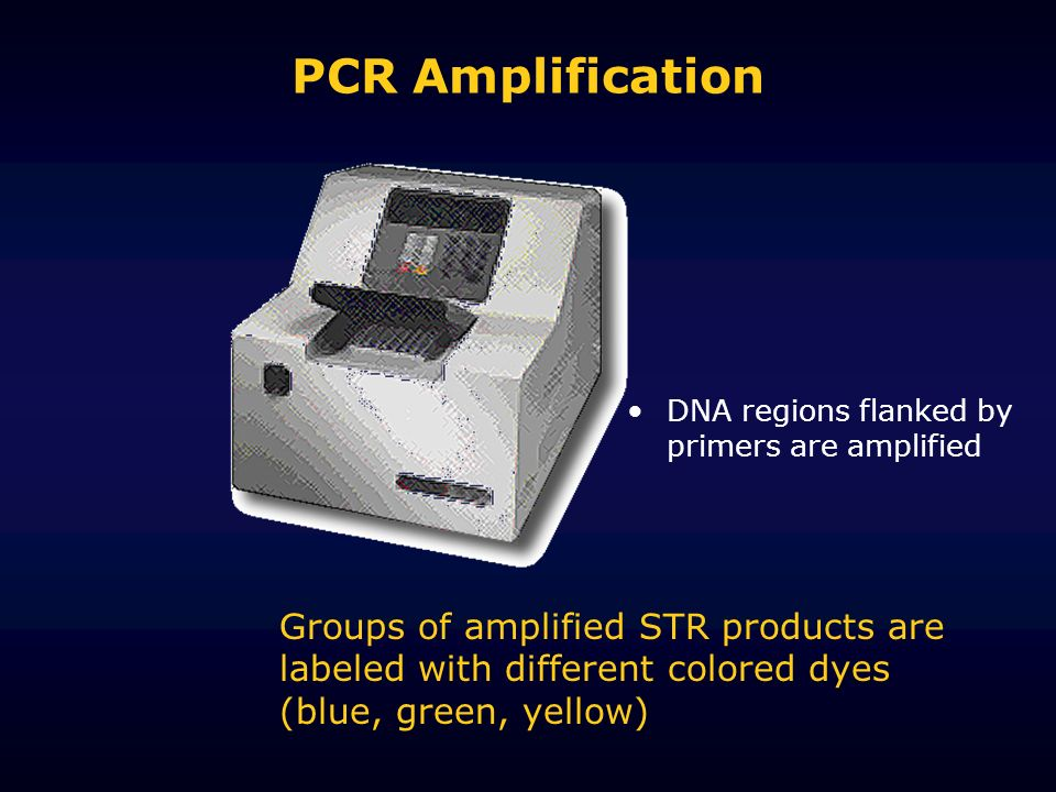 PCR Amplification DNA regions flanked by primers are amplified.