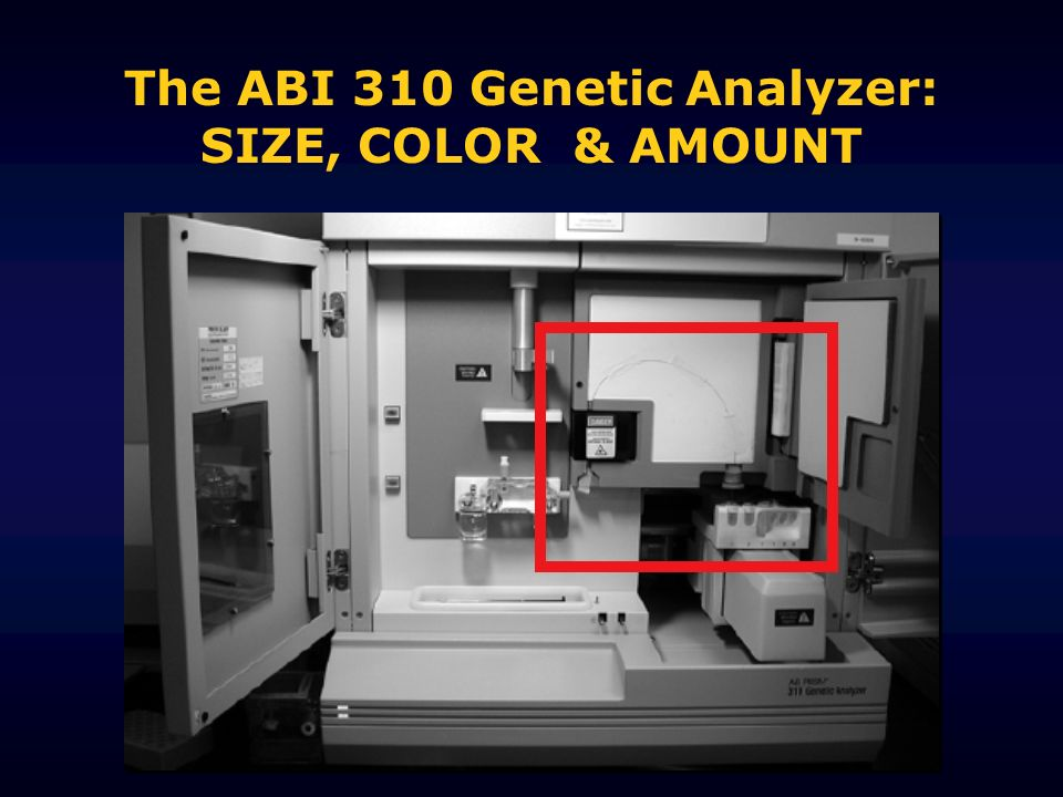 The ABI 310 Genetic Analyzer: SIZE, COLOR & AMOUNT