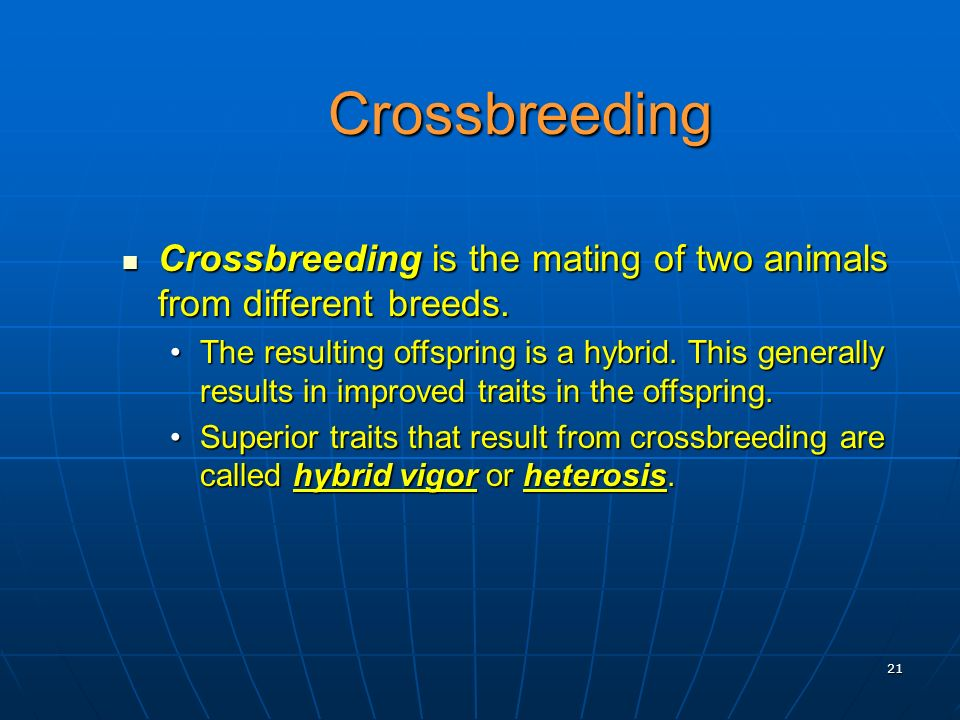Crossbreeding Crossbreeding is the mating of two animals from different breeds.