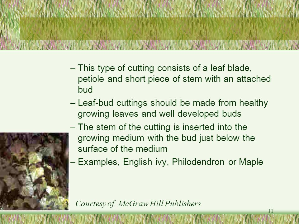 Examples, English ivy, Philodendron or Maple