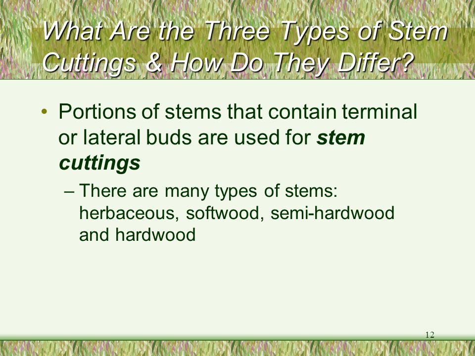 What Are the Three Types of Stem Cuttings & How Do They Differ