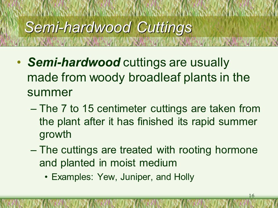 Semi-hardwood Cuttings