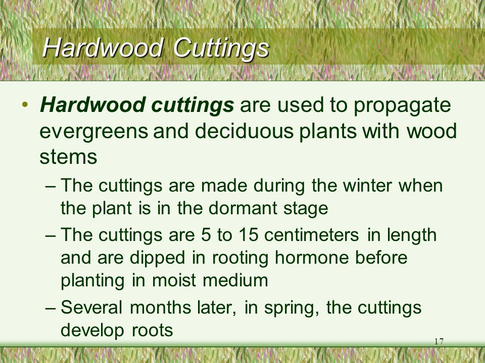Hardwood Cuttings Hardwood cuttings are used to propagate evergreens and deciduous plants with wood stems.
