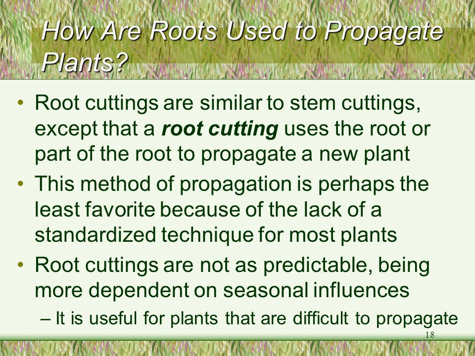 How Are Roots Used to Propagate Plants