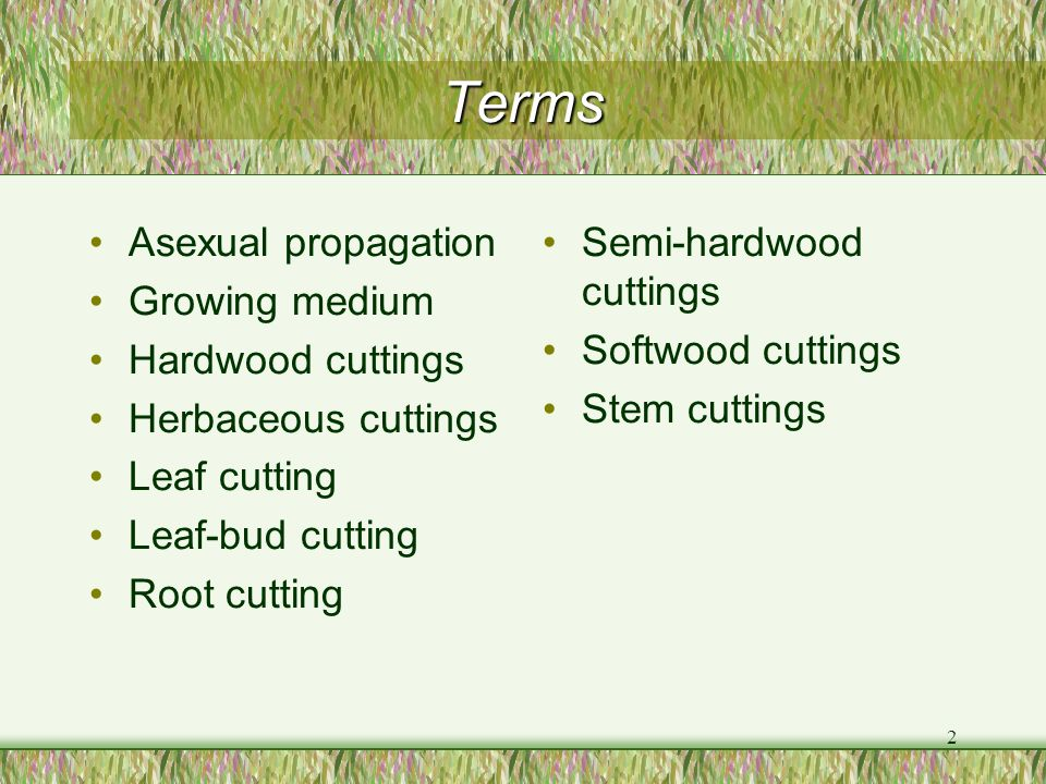 Terms Asexual propagation Growing medium Hardwood cuttings