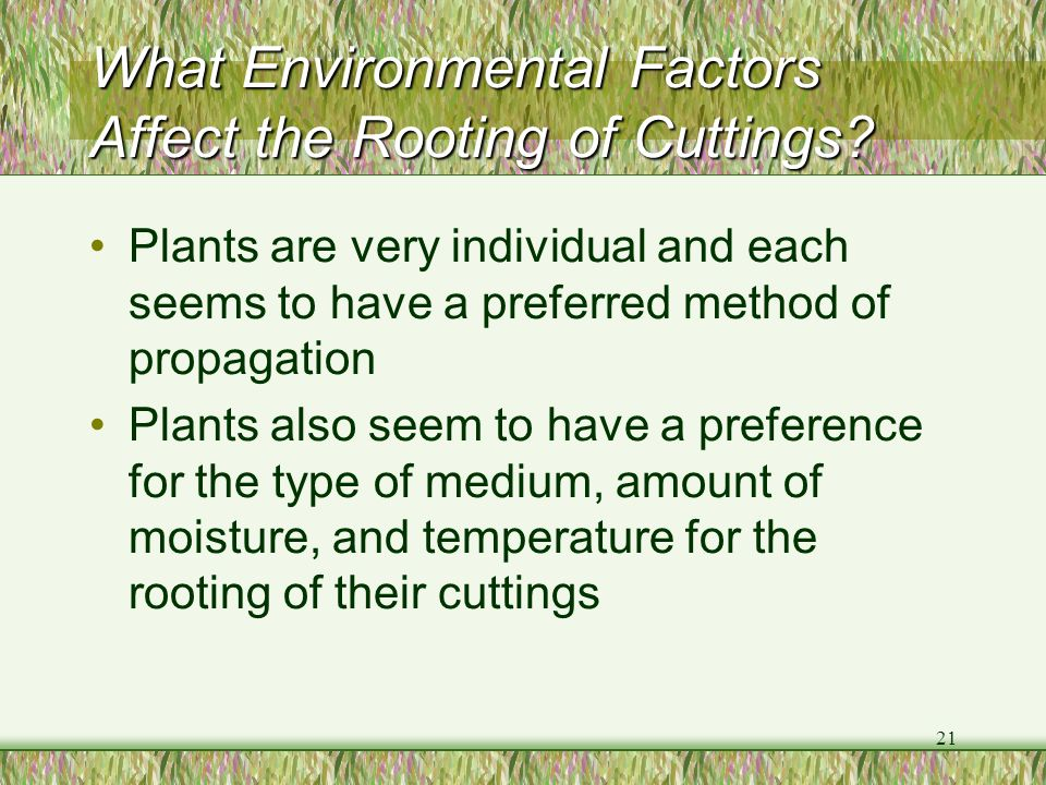 What Environmental Factors Affect the Rooting of Cuttings