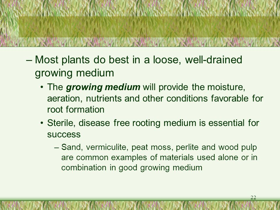 Most plants do best in a loose, well-drained growing medium