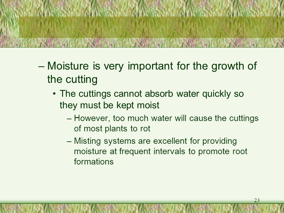 Moisture is very important for the growth of the cutting
