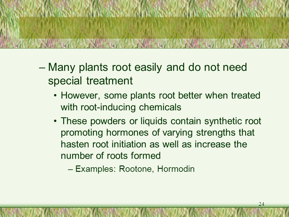Many plants root easily and do not need special treatment