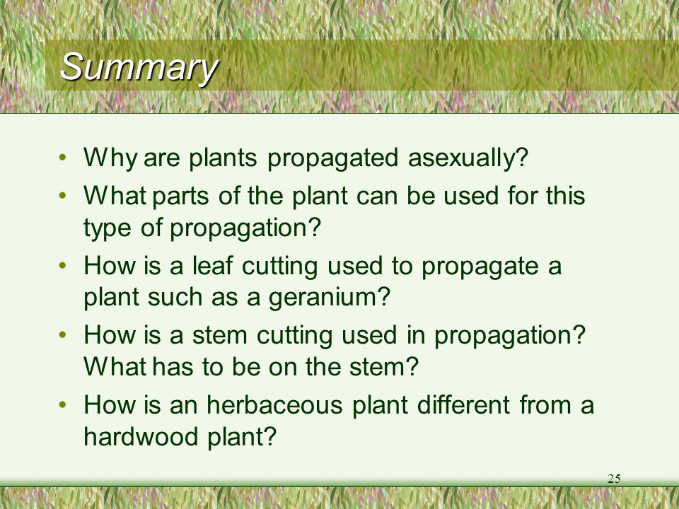 Summary Why are plants propagated asexually
