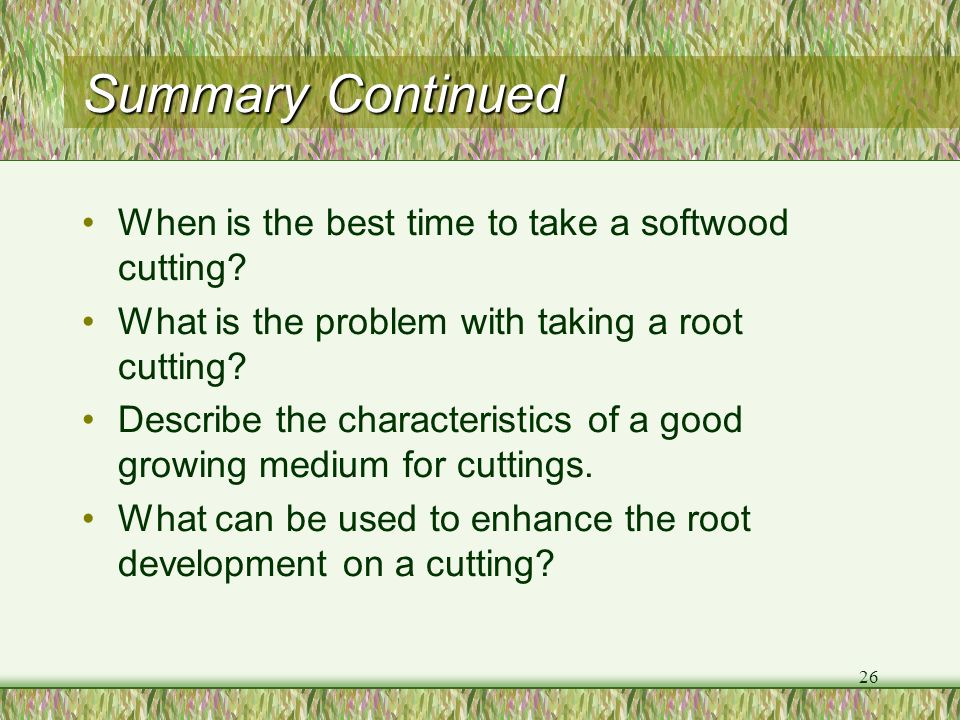 Summary Continued When is the best time to take a softwood cutting