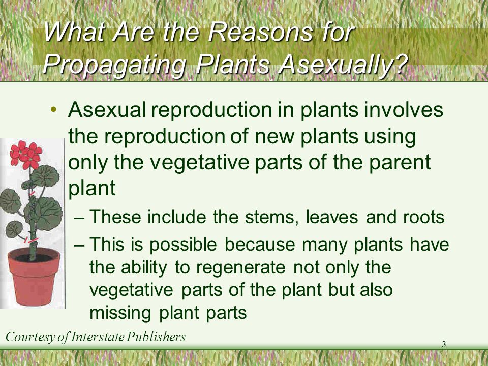 What Are the Reasons for Propagating Plants Asexually