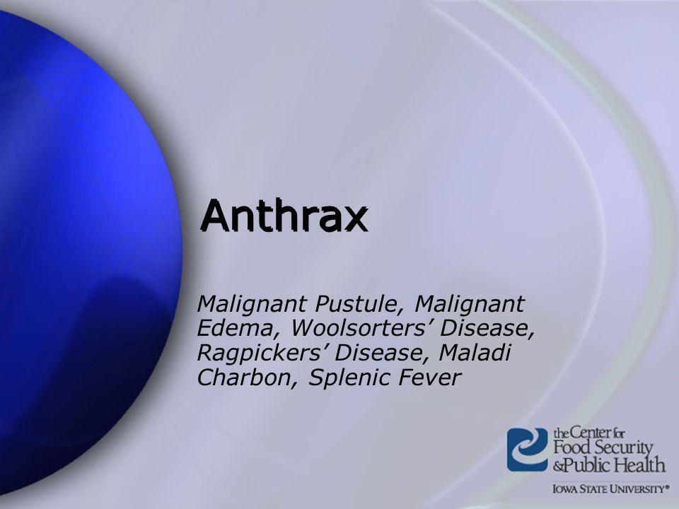 Anthrax Malignant Pustule, Malignant Edema, Woolsorters' Disease, Ragpickers' Disease, Maladi Charbon, Splenic Fever.