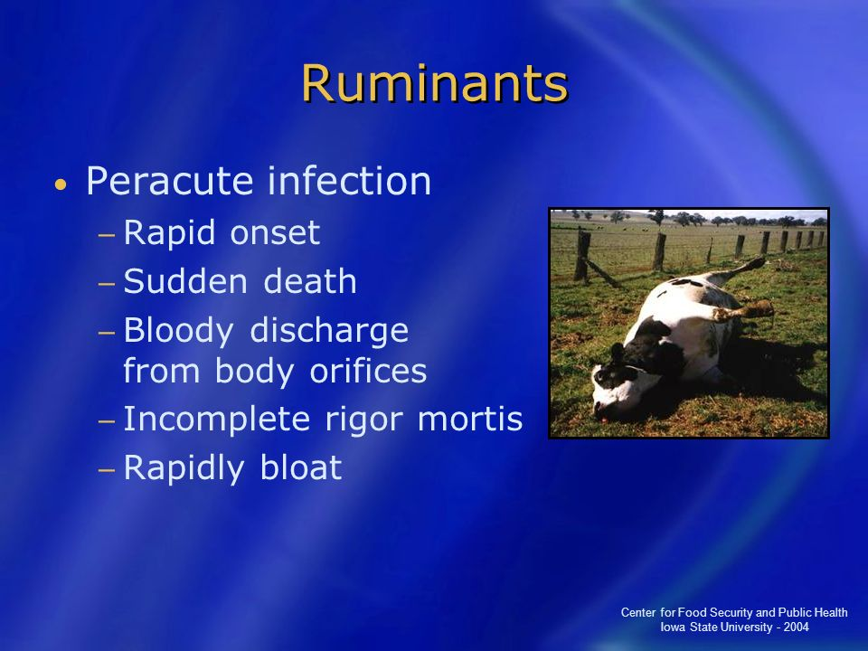 Ruminants Peracute infection Rapid onset Sudden death