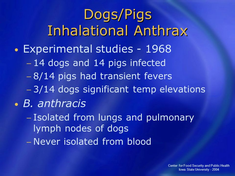 Dogs/Pigs Inhalational Anthrax