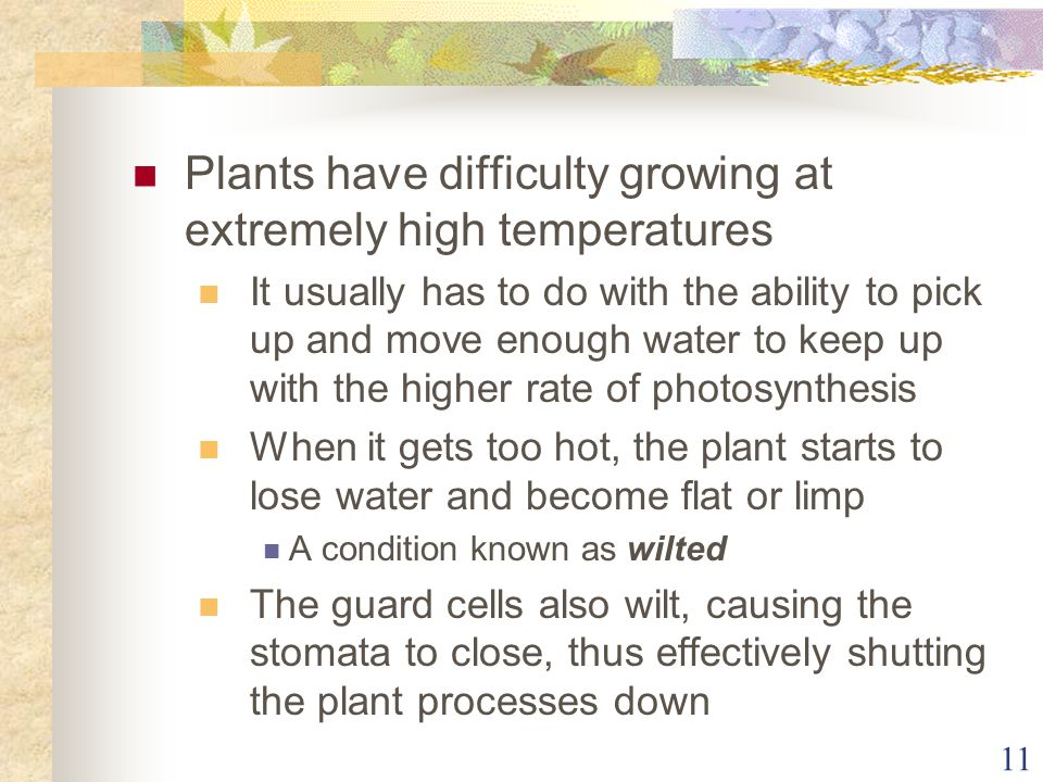 Plants have difficulty growing at extremely high temperatures