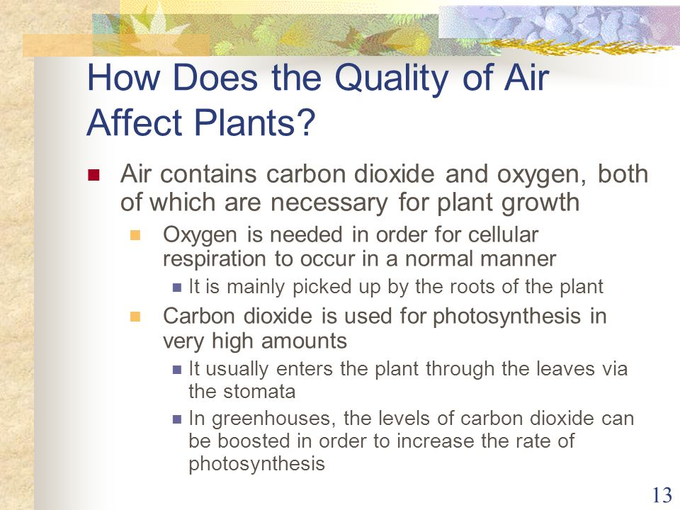 How Does the Quality of Air Affect Plants