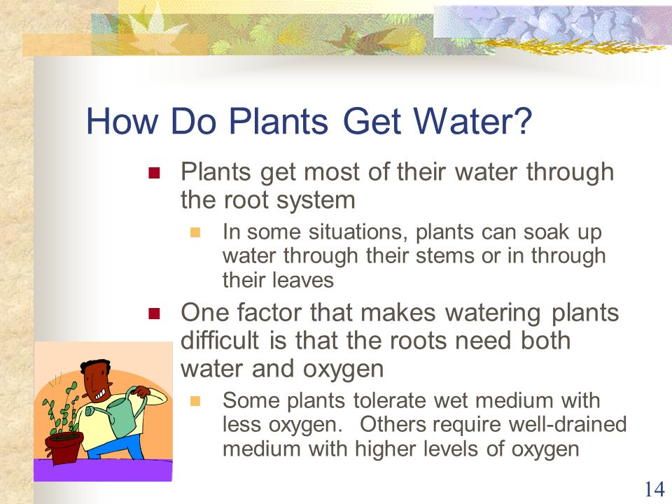 How Do Plants Get Water Plants get most of their water through the root system.
