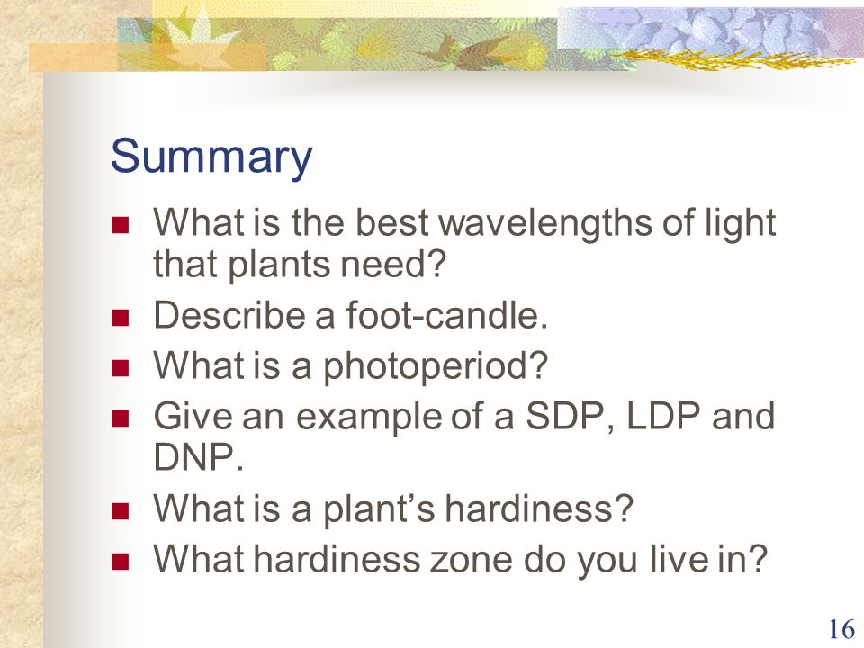 Summary What is the best wavelengths of light that plants need
