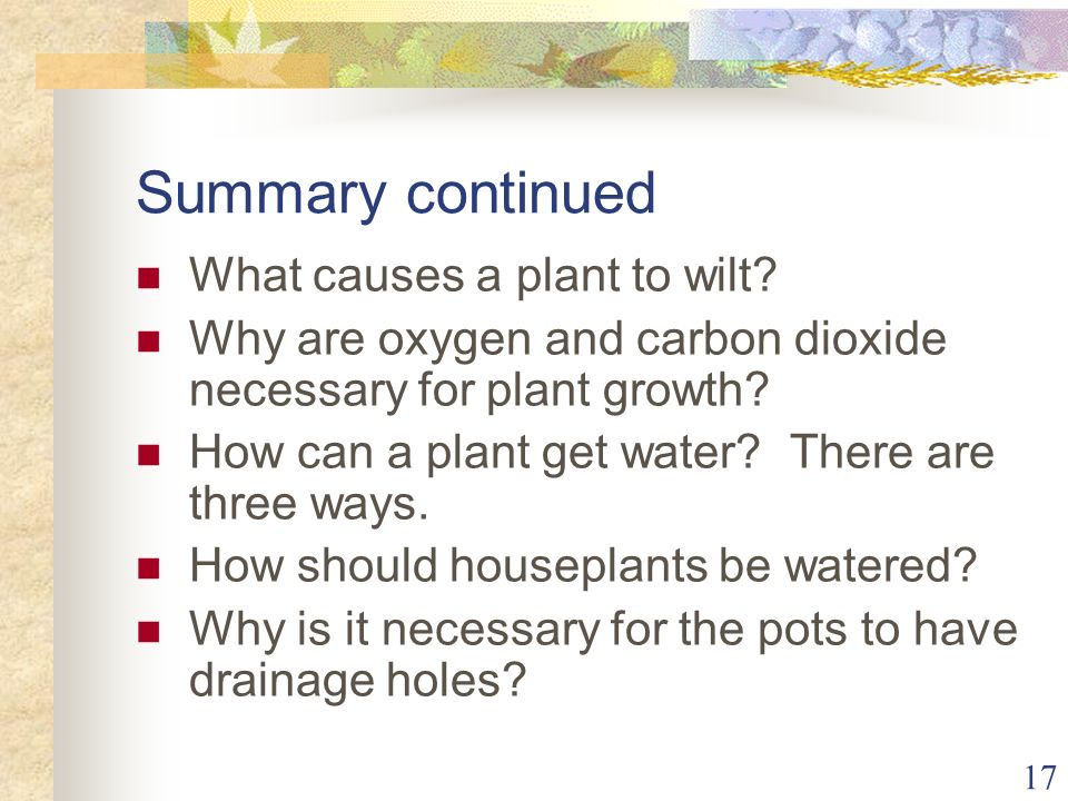 Summary continued What causes a plant to wilt